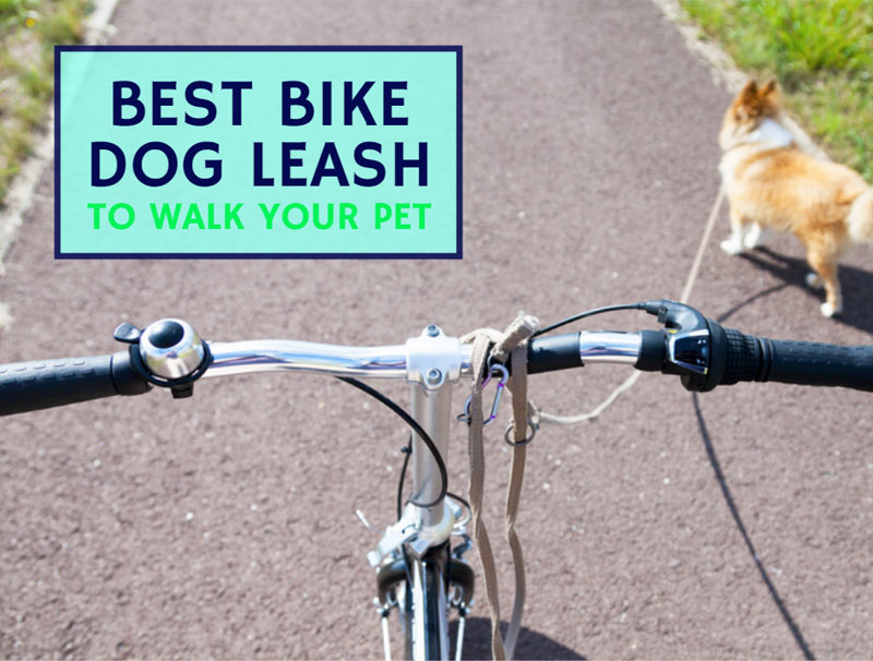 Best Bike Dog Leash To Walk Your Pet